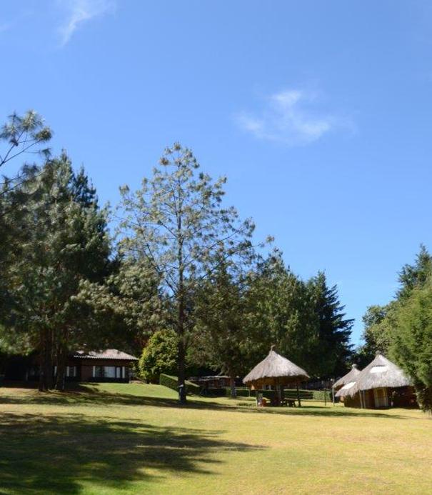 Colegio Buena Tierra, Camps